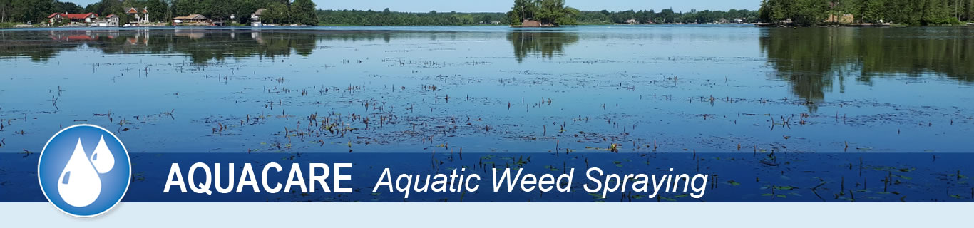 A lake full of weeds that are growing to surface needs water weed control services from Peerless Turfcare