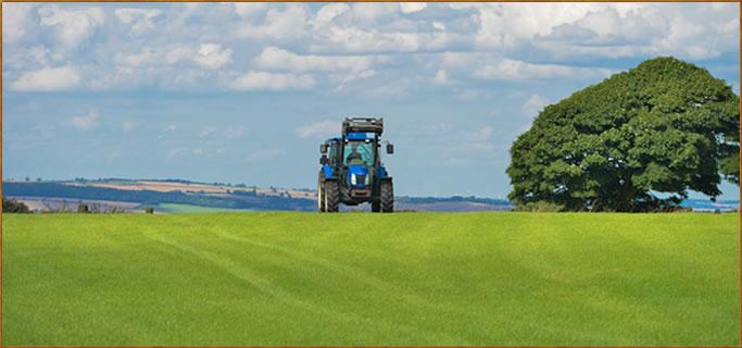 field agriculture farm grass