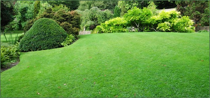 Lawn care services by Peerless Turfcare