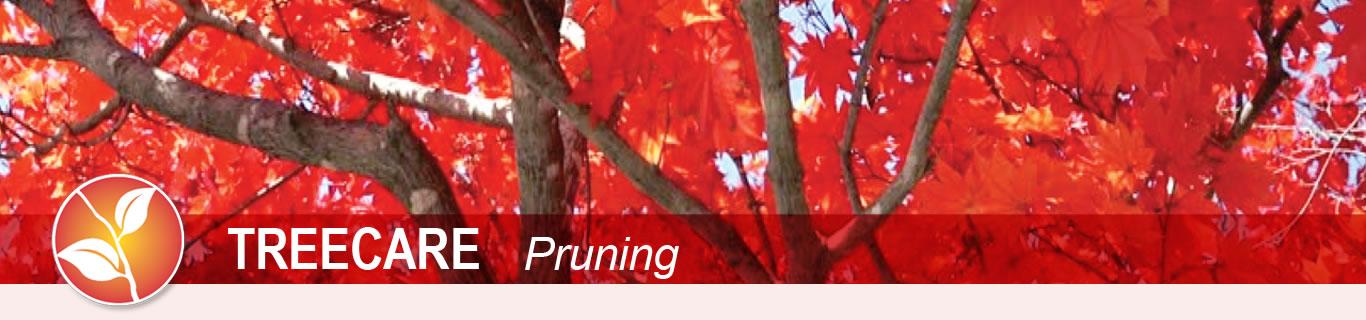 treecare pruning