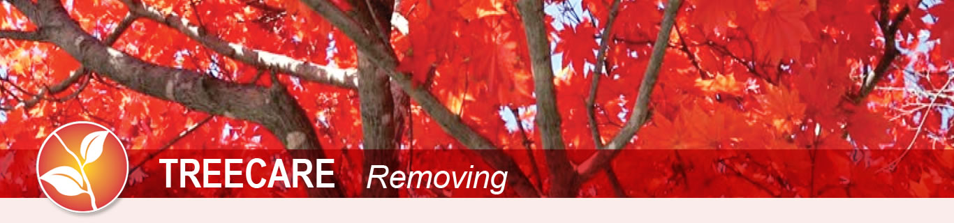 treecare removing