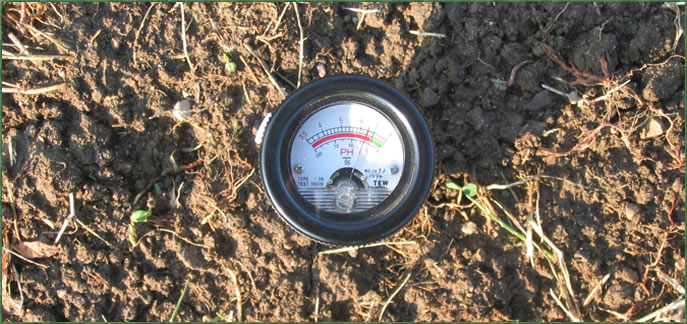 A pH tester placed in damaged lawn to determine lawn health.