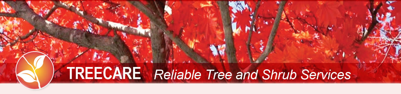 An autumn tree made beautiful with tree care from Peerless Turfcare